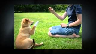 In Home Dog Training - Dog Trainer Near Rockwell, Nc 28138
