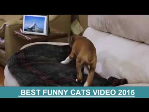 funny videos of cats|Funny Dogs Videos|Best Funny Videos