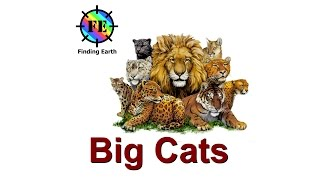 Types of Big Cats (wild cats) - Finding Earth