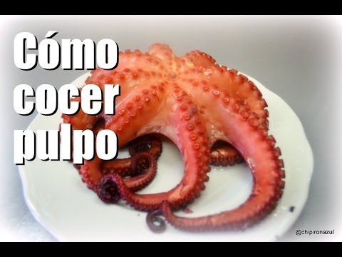 c mo cocer pulpo fresco youtube