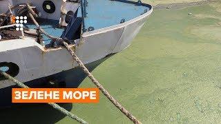 Купатися чи не купатися. Чому море в Одесі позеленіло?