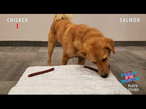 taste-test-challenge:-plato's-thinker-sticks-dog-treats
