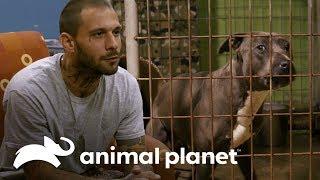 Ex-convicto consigue oportunidad para trabajar con perros | Pit bulls y convictos | Animal Planet
