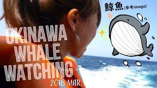 "【日本人沖繩旅遊】鯨魚怎麼那麼「超級貼心」!?""賞鯨""好好玩!(Let's go ""Whale Watching"" with me!!)【SAYULOG】"
