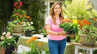 Gambar cover Home & Garden - Gerbera Daisies 101 with Shirley Bovshow - Hallmark Channel