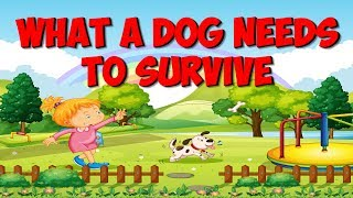 What a Dog Needs to Stay Alive | Dog Song for Kids | Jack Hartmann