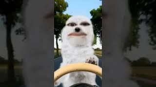 Foto Koala lucu bicara cabe cabean