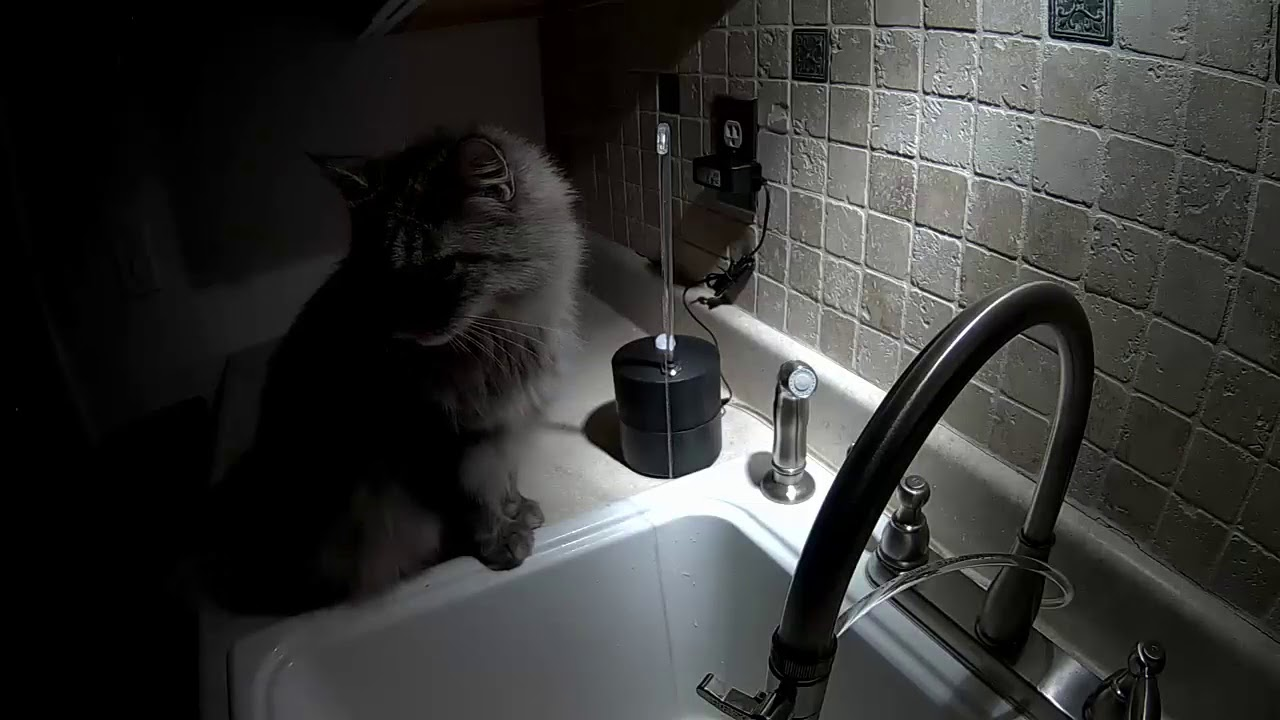 Practical solutions for a cat that drinks from the faucet
