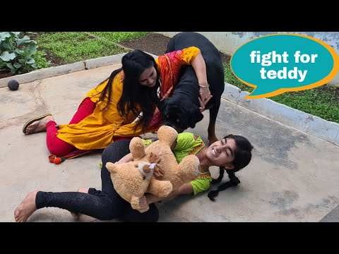 My dog and my sister fight for teddy||funny dog videos.