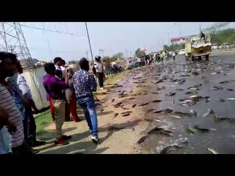 WACTH!! Fish Spilled Onto NH-24 Road india