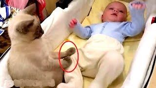 Cats Protecting Babies Videos Compilation 2019 ???? Cat Loves Babies