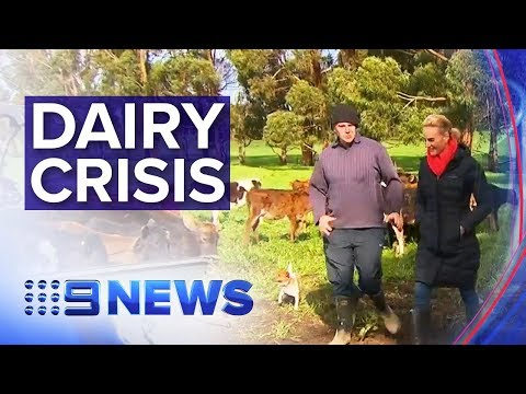 Dairy farmers open up about struggling industry | Nine News Australia