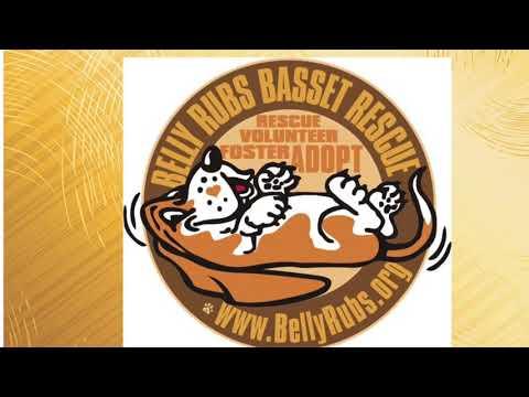 "<span class=""title"">Introducing BellyRubs Basset Hound Rescue</span>"