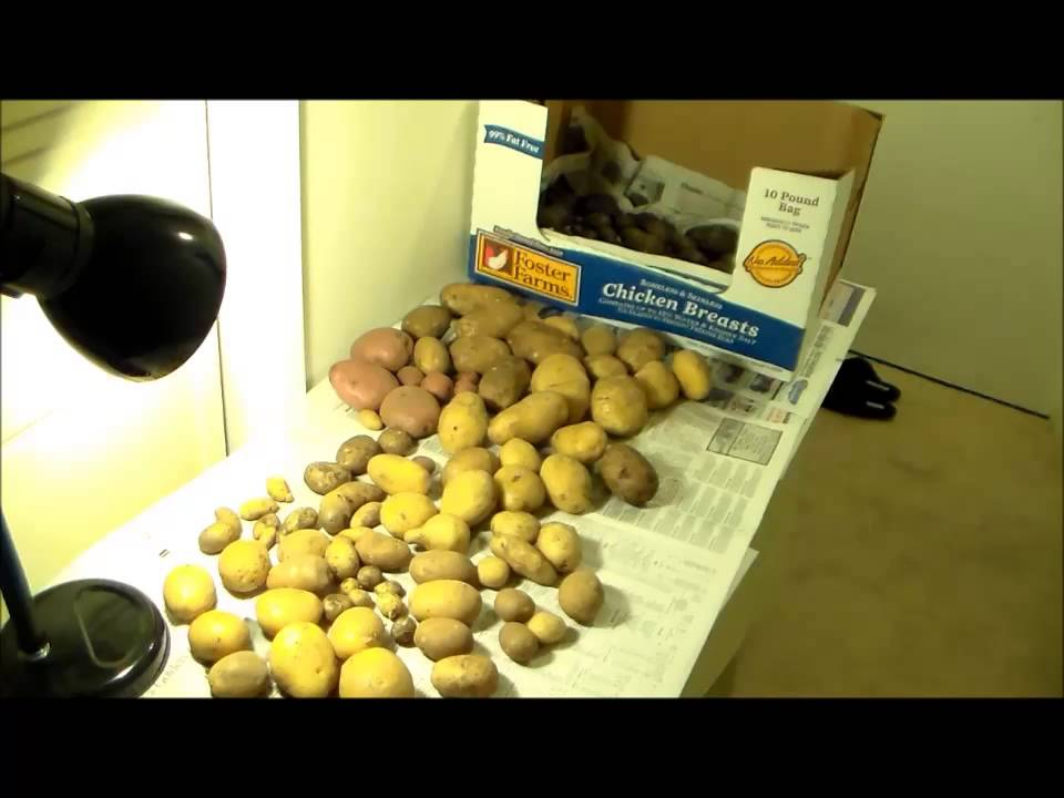 How to Cure & Store Potatoes, Keep them Away from Light!