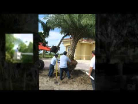 Landscaping Boynton Beach Fl 561 733 3536 Boynton Beach