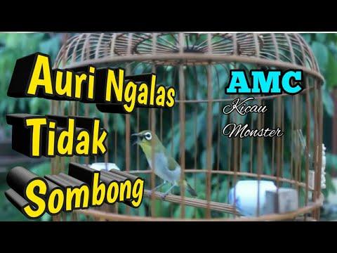 Auriventer PCMI Chapter Pemalang | AMC