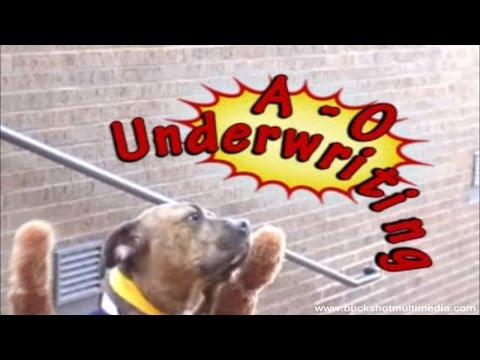 Underwriting Dog