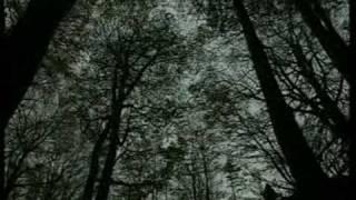 video sulle bellezze del Parco Nazionale delle Foreste Casentinesi ...