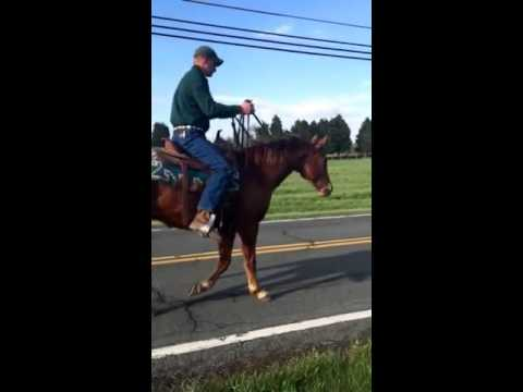 Hank - Broke Sorrel Quarter Horse Gelding - SOLD!!