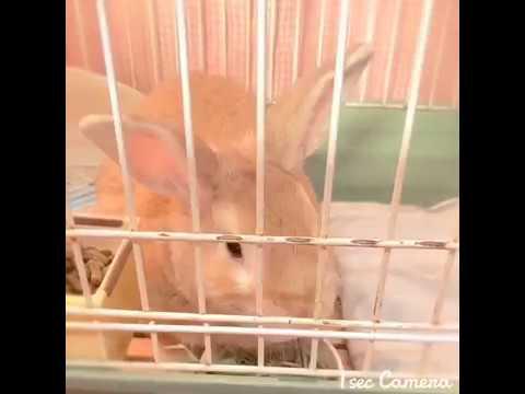 Rabbit 今朝のうさぎさん
