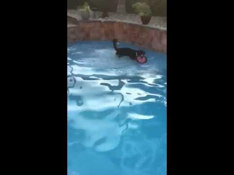 Brody swimming