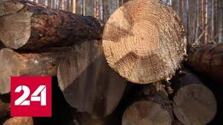 Инспекторы проверят, почему в иркутском лесничестве редеет лес. Дежурная часть - Россия 24
