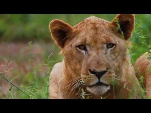 Kingdom of Swaziland Long Version Final Backpacker Films, LLC