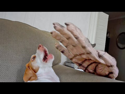 Dog vs. Giant Zombie Hand: Cute Dog Maymo