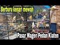 Berburu Kenari Mewah Di Pasar Pedan Klaten  Mp3 - Mp4 Download