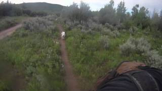 Oliver on the Singletrack Thumbnail