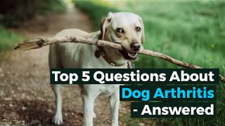 Top Questions about Dog Arthritis Answered
