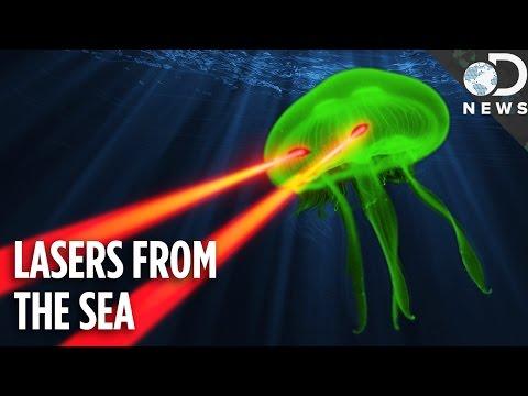 Jellyfish Lasers Are Revolutionizing Quantum Physics