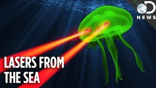Jellyfish Lasers Are Revolutionizing Quantum Physics