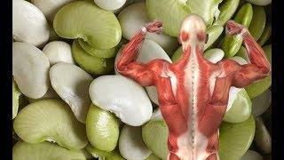 10 أغذية الأكثر إحتواء على البروتين ومفيدة لبناء العضلات !