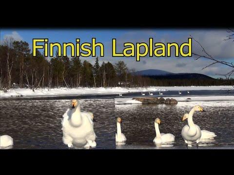 Nature Documentary-Finnish Lapland