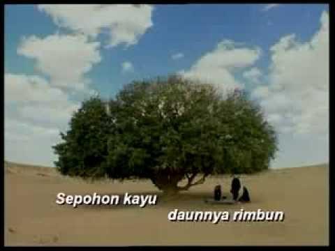 Sepohon Kayu Daunnya Rimbun