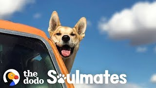 People Who Moved Away For Their Pets | The Dodo Soulmates
