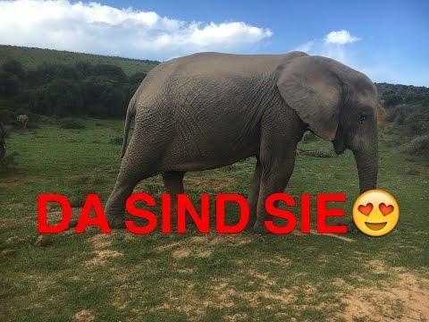 Tag 8 letztes Mal  Suedafrika Reise Port Elizabeth Addo Elephant braaitour     Klaus grillt
