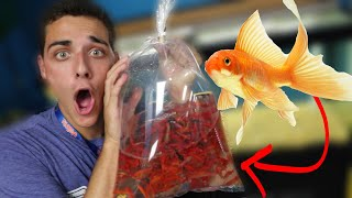 I BOUGHT EVERY GOLDFISH (PET STORE)
