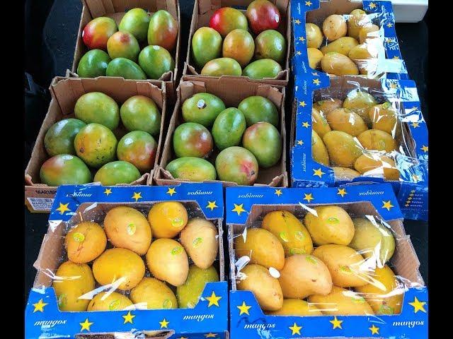 Mango Island - Preparation & Grocery Shopping