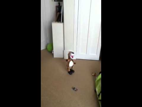 Crazy dancing tiger
