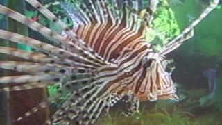 Морские виды рыб акватеррариума