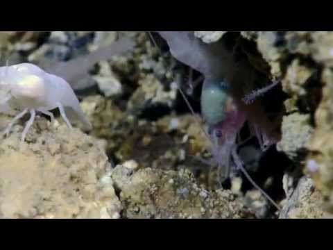 Hydrothermal Vents: What does the future hold?