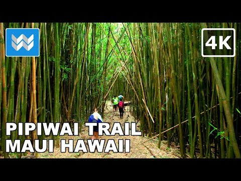Hiking Pipiwai Trail in Kipahulu, Maui Hawaii 【4K】