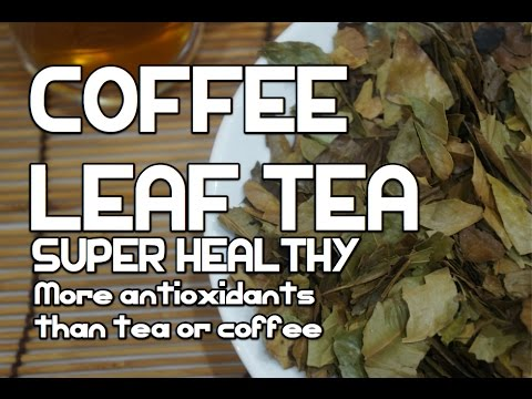 Coffee Leaf Tea - Amazing - Antioxidants Diabetes Weight Loss