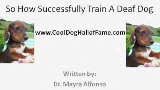 You Too Can Train A Deaf Dog.