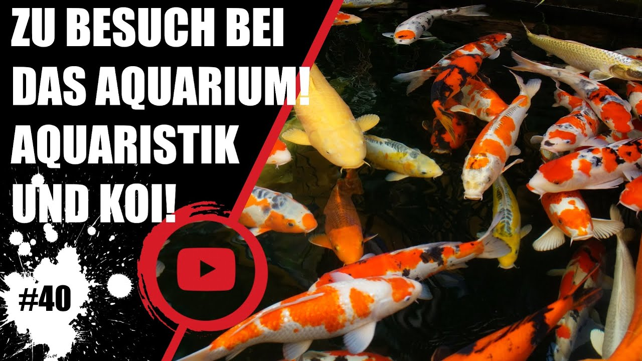 koiteichblog 40 zu besuch in braunschweig das aquarium youtube. Black Bedroom Furniture Sets. Home Design Ideas