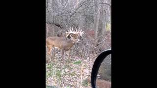Video Monster Buck in Illinois download MP3, 3GP, MP4, WEBM, AVI, FLV Agustus 2018