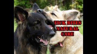 Tick Bites Natural Treatment: Ledum Palustre For My Dogs
