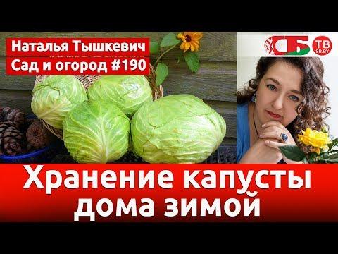 Как сохранить капусту в холодильнике